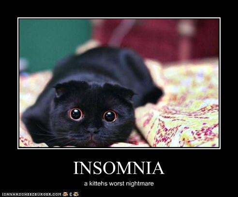 Insomnia Kitty