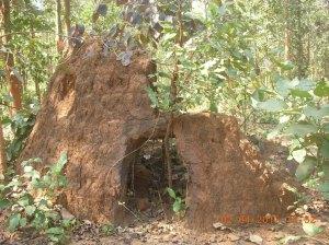 Forest Hiding Place