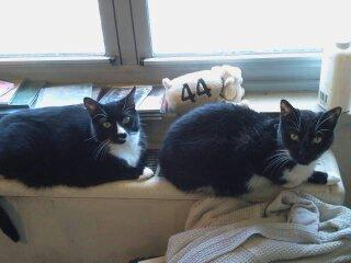 Sylvester & Weezer