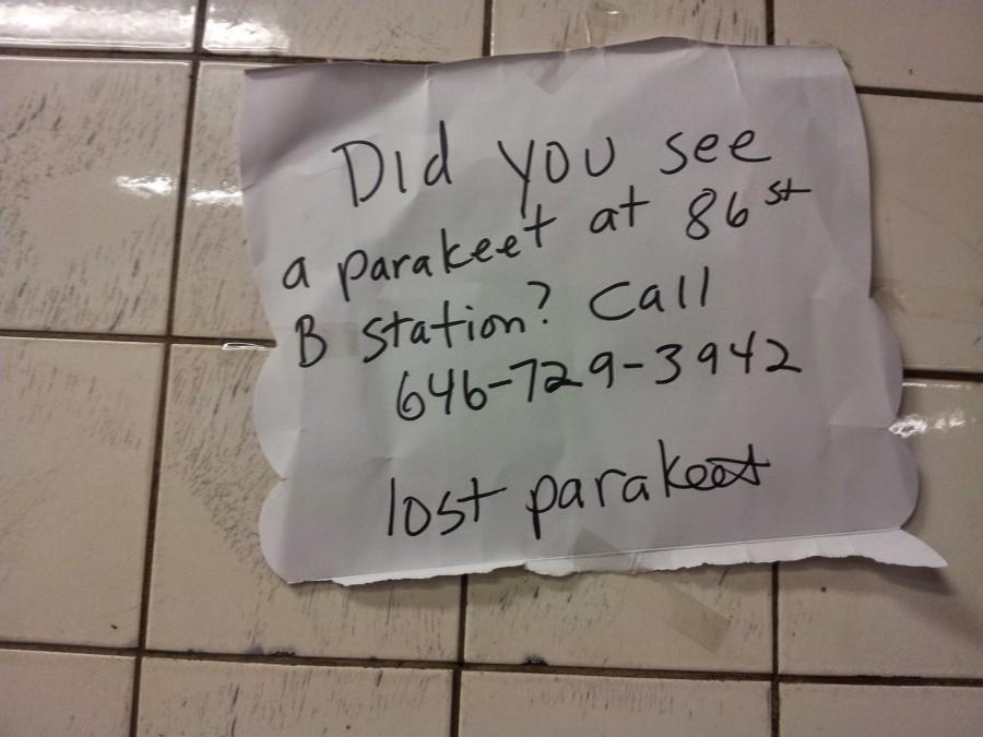 Lost Parakeet