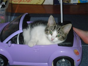 Kitty in a Barbie car