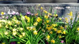 Spring Flowers NYC ~~ DeBorah Ann Palmer