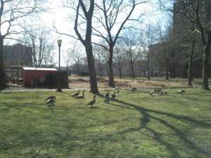Mother Goose Birthday27