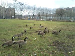 Mother Goose Birthday3