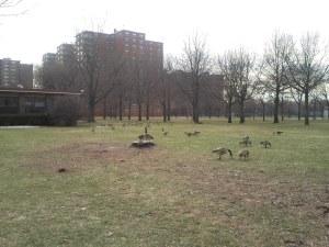 Mother Goose Birthday8(1)