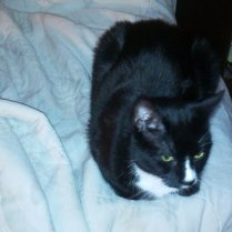 Sylvester on Rumpled Bed