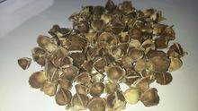 moringa_seeds.jpg_220x220