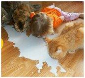 Cat Sip