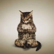 Cat_Meditate