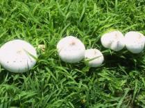 Mushroom_Hotels