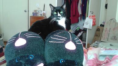 Cat Slippers_Sylvester