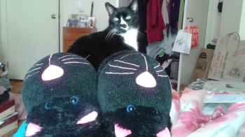 Cat_Slippers_Sylvester