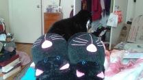 Cat_SlippersMessyRoom