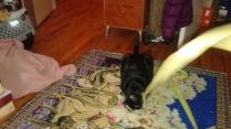 Sylvester enjoys Palm Sunday