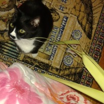 Sylvester Enjoying Palm Sunday