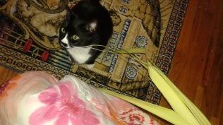 Sylvester Enjoying Palm Sunday