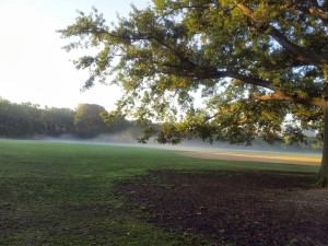 Foggy Misty morn over Central Park in the ball field