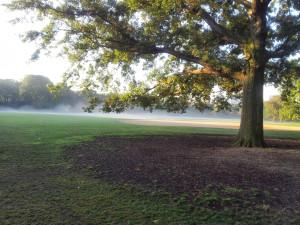 Foggy Misty Morn Central Park