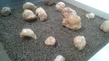 Cranium Plants