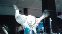 Dino Big Chicken & Chicks