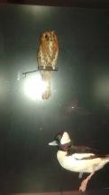 Dino Birds 1 and 2