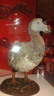 Dino Dodo
