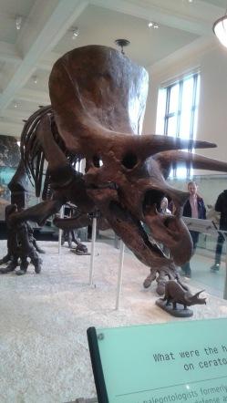 Dino Tri
