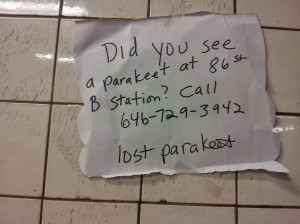 Parakeet Number