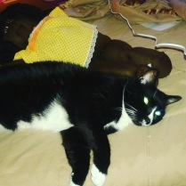 sylvester-and-doll