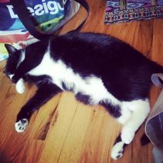 Sylvester Cat Yoga