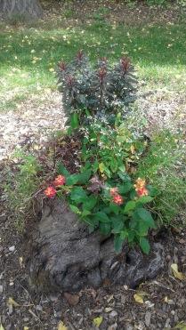 Living Blooming Flowers in dead tree trunk