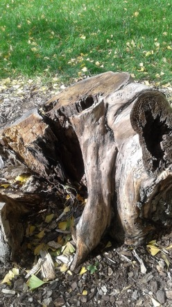 Living Dead tree stump