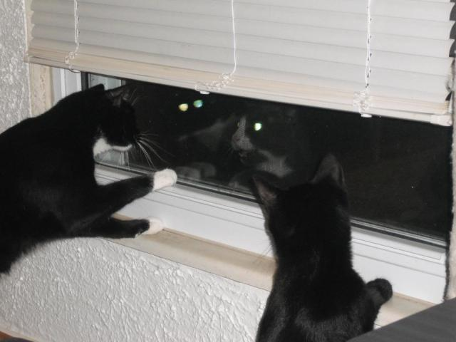 Go away! We don't want any more pussies around here!