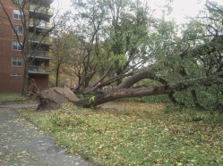 Hurricane Sandy Rochdale Village, Jamaica, Queens, New York