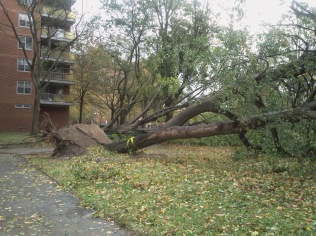 Hurricane Sandy Rochdale Village, Jamaica, Queens, New York