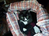 Sylvester Laundry Bag
