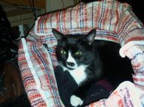 Sylvester loves my laundry bag